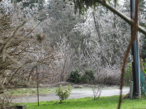 Ice will coat all the tiniest branches of the trees -- making them look like beautiful ghosts.