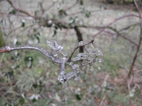In this close up of a tiny branch you can see how it really coats every little nook and cranny.