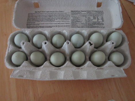 A dozen tiny blue eggs