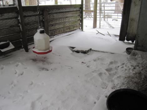 chicken coop snow