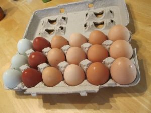 Fresh pasture raised eggs